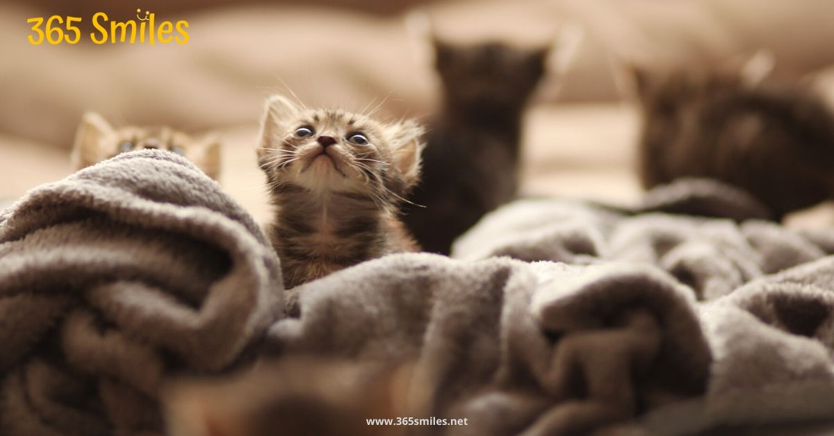 Animal shelters are happy with your blankets and towels