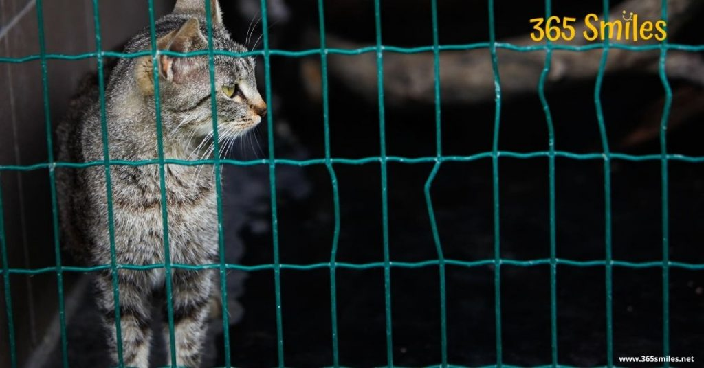 Financially support a cat from a shelter