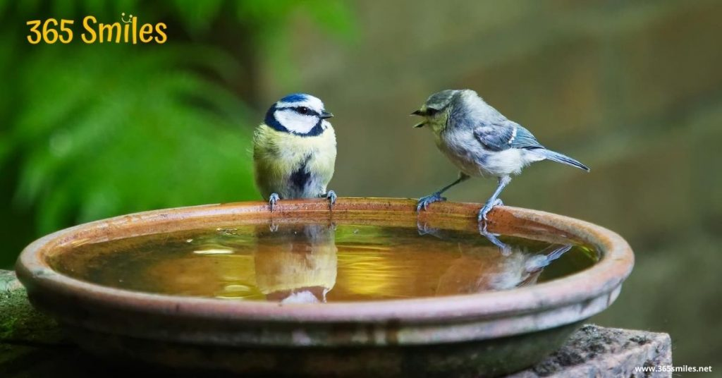 Birds love a place to bathe and drink