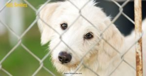 Donate food to animal shelters