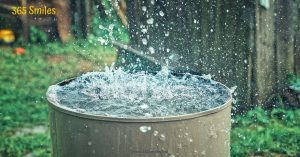 Collect rainwater for your plants