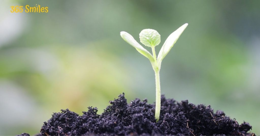 See a plant grow by your care