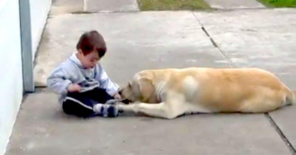 Labrador befriends DS boy